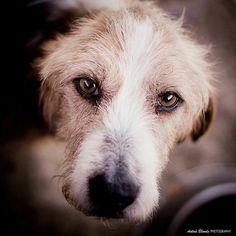 Me derrite la sinceridad de tus ojos - antua blonde photography -  fotógrafo solidario - barcelona - animal - fotos - reportajes - animal de compañía - maresme - cat - gat - gato - dog - gos - perro