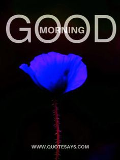 Heart Melting Good Morning Flower Images to Use In Morning Happy Saturday Images, Good Morning Happy Saturday, Good Morning Kisses, Latest Good Morning, Happy Sunday Quotes, Good Morning Greetings, Goog Morning, Good Morning Video Songs, Good Morning Friends Images