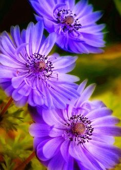 Here's what we found about purple flowers. Read up the info about purple flowers, and learn more about it! Exotic Flowers, Amazing Flowers, Colorful Flowers, Purple Flowers, Beautiful Flowers, Beautiful Gorgeous, Happy Flowers, Flower Pictures, Trees To Plant