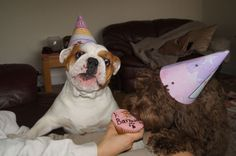 Sharing my birthday cake with Harvey