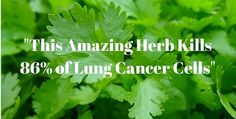 WOW! It is really amazing to know that this herb can eliminate lung cancer cells by 86%!