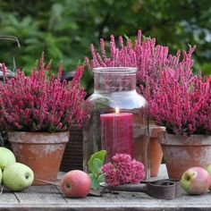 Herbst im Garten - The most beautiful garden decor Deco Champetre, Balcony Flowers, Fall Planters, Most Beautiful Gardens, Deco Floral, Autumn Garden, Autumn Fall, Fall Crafts, Garden Inspiration