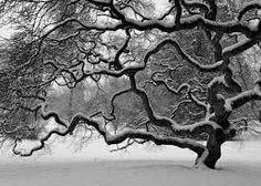 Αποτέλεσμα εικόνας για black and white photography nature