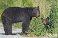 Endangered Red Wolves, Black Bears & More: Our Next Eco Adventure!
