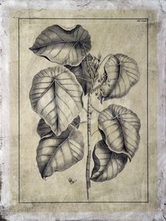 Embellished Antique Foliage IV Giclee Print by Pierre-Joseph Buchoz at Art.co.uk