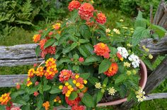 Colorful flowers! Colorful Flowers, Plants, Stuff Stuff, Plant, Planets