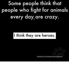 SAVE THE ANIMALS!  ANTI ANIMAL ABUSE!