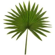Image for Sainsbury's Home Palm House Faux Single Stem Palm Leaf from Sainsbury's Tropical Plants, Tropical Leaves, Fan Palm, Apartment Balcony Decorating, Leaf Template, Diy Crafts For Gifts, Faux Plants, Snake Plant, Leaf Art
