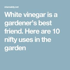 White vinegar is a gardener's best friend. Here are 10 nifty uses in the garden