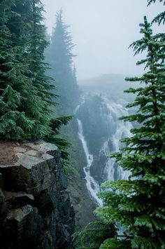 Nature outdoor travel destination // forest // waterfall // fog // misty