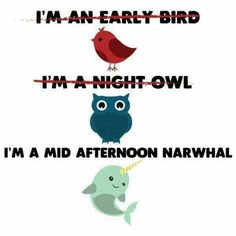 I'm not an early bird or a night owl. I'm a mid afternoon narwhal. Staying Up Late, Mid Afternoon, Monday Motivation, Routine, Owls, Kindergarten, Preschool, Kindergartens, Preschools