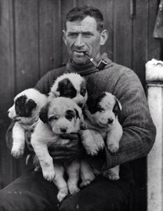 Tom Crean with sleigh dog puppies Roger, Nell, Toby and Nelson, taken during the Shackleton Expedition of 1914–1916 - Frank Hurley