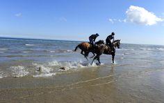 Laytown. #sea #sand #horseracing #Ireland #unique Emerald Isle, Horse Racing, Shades Of Green, Camel, Ireland, Sea, Unique, Animals, Animales