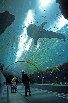 Georgia Aquarium, largest aquarium in the   world. I have been, but only for a brief hour. I want to return and actually   explore.