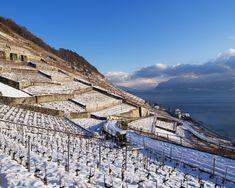 The ultimate international guide to Swiss fine wines Lake Geneva, Lausanne, Fine Wine, Bio, Switzerland, Wines, Vineyard, Louvre, Mountains