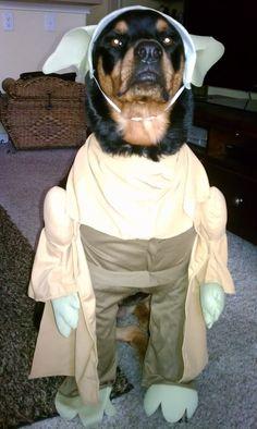 Halloween 2011  Yoda!!