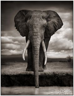 Taken by Brandt... he tries to capture the beauty of Africa and state the message to conserve the African wildlife