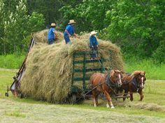 Amish haying in Northern Maine ~ Paul Cyr Photography