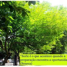 #psicologia #psicóloga #NovaIguaçu #sorte #preparação #oportunidade #ação #cognitivocomportamental #followme