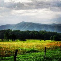 Took this while biking through Cade's Cove in the Smokies.