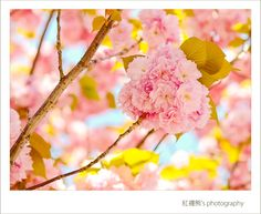 I love the soft & sweet colors.    Photo by Kyle Lin.