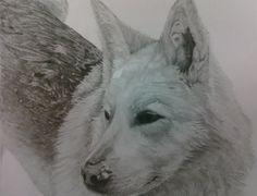 My Malamute Drawing, Lady-Lynn