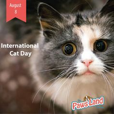 #InternationalCatDay is a full 24 hours of recognition and veneration of one of…