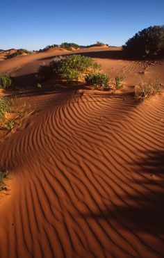 Utah's Coral Pink Sand Dunes State Park. #LifeElevated