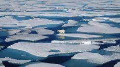 Άσχημα νέα: Φέτος έλιωσαν οι περισσότεροι πάγοι της Αρκτικής από το 1979! Mother Earth, Mother Nature, Greenland Ice Sheet, Alaska, Arctic Landscape, Polo Norte, Before The Flood, Arctic Ice, Ocean Drive