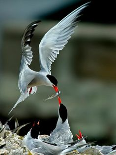 Bird Feeding - null