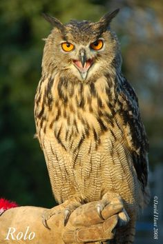 York Bird of Prey Centre, Huby: See 811 reviews, articles, and 671 photos of York Bird of Prey Centre, ranked No.1 on TripAdvisor among 3 attractions in Huby.