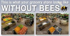 Here's Why We Need To Save The Bees & 10 Ways You Can Help