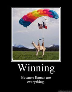 winning because llamas are everything - Motivational Poster