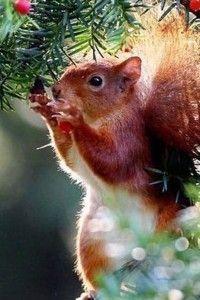 фотогалерея забавные животные