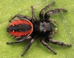 Resultado de imagem para spider