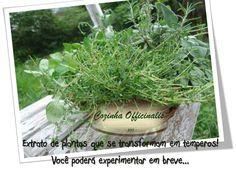 Plantas na cozinha!
