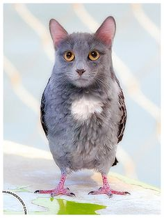 2010 02 21 Cat amongst the Pigeons by Human_Descent, via Flickr