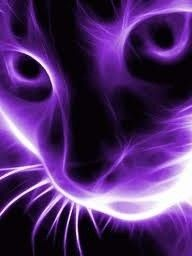 Purple Cat I don't even like cats