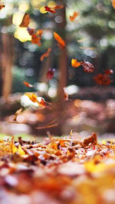 papers.co-mw77-fall-leaves-nature-tree-year-sad-33-iphone6-wallpaper