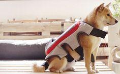 """I cani potranno scattare foto e postarle su Facebook tutto da soli """"Posting tail"""" è un vestito iper-tecnologico per cani. Nato dalla collaborazione di Pedigree Spagna e l'agenzia pubblicitaria Saatchi & Saatchi. E' dotato di fotocamera, sensore, wi-fi e processore.  #fotografia #animali #cani #invenzioni"""