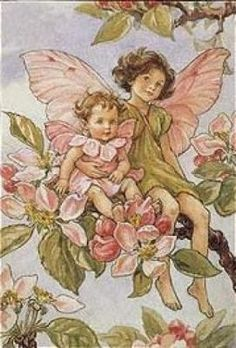 Illustration for the Apple Blossom Fairy from Flower Fairies of the Alphabet - author / illustrator Cicely Mary Barker Cicely Mary Barker, Art And Illustration, Flower Fairies, Elfen Fantasy, Fairy Pictures, Vintage Fairies, Fairy Art, Faeries, Illustrators