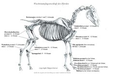 Diagnose Arthrose - wie fängt es an, wie geht es weiter? Teil 1 - auslösende Faktoren und vorbeugen - Hippovital - Ganzheitliches Pferdetraining