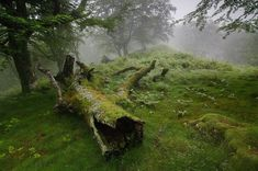 World Building account of Brighemclept. Feel free to stick around if you like fantasy, nature and old world vibes. Mother Earth, Mother Nature, Outlander, Baba Yaga, Nature Aesthetic, Aesthetic Photo, Breath Of The Wild, Dragon Age, Bushcraft