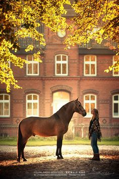 Spanish Horses Germany    the stud farm in Traventhal  Janin Krull