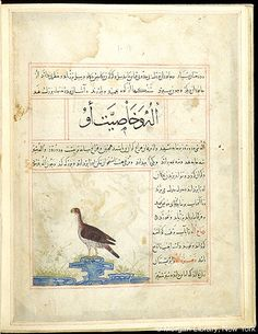 Bestiary, Eagle in left profile standing on rock.- The Morgan Library & Museum