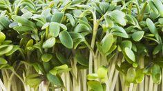 ŘEŘICHA: Nejzdravější zelenina na světě? Herb Garden, Home And Garden, Nordic Interior, Korn, Pesto, Life Is Good, Health Fitness, Herbs, Gardening