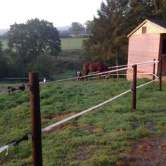 What are the Different Types of Fence, Cool Photos, Electric, Patio, Horses, Plants, Animals, Image, Accessories