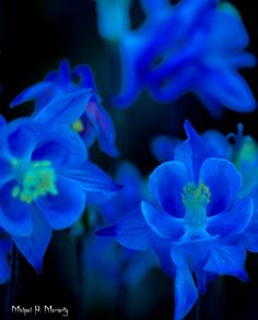 Midnight Neon Blue Flowers Photo Credit: Michael Moriarty Photography