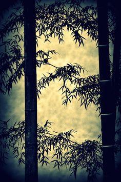 和趣 #bamboos #japan
