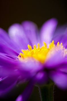Contrast is good... Purple and yellow are opposite on the color wheel and it totally works for this image!